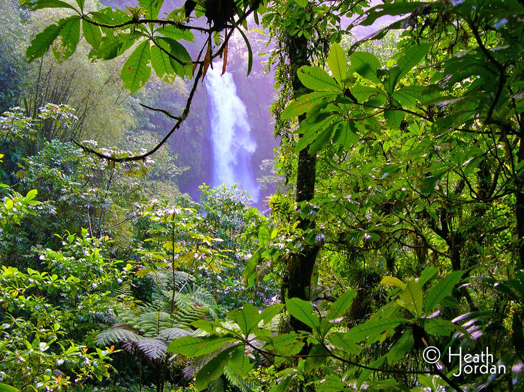 Trafalgar falls rainforest
