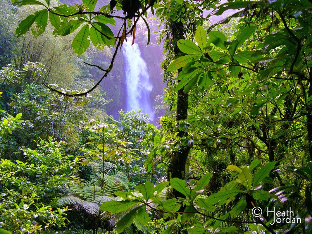 Trafalgar falls rainforest