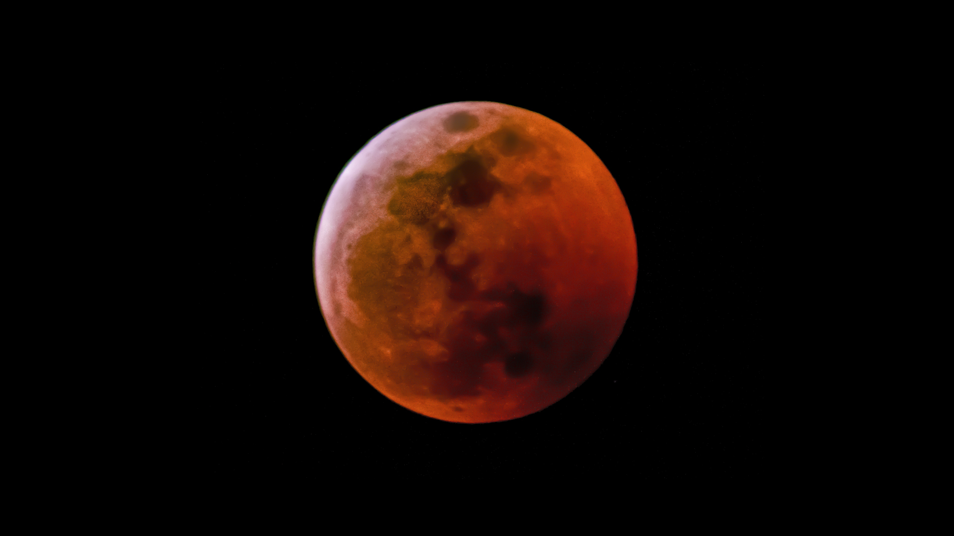 wolf blood moon january 2019 florida - photo #13